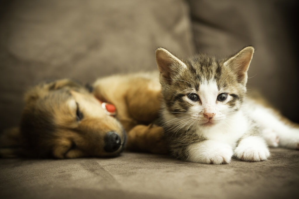 Heating and Cooling Tips for Pet Owners